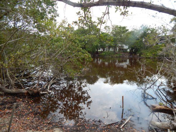 Sanibel Bayous: Buck Key Road