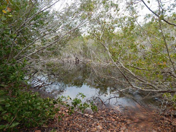 Sanibel Bayous: Wild Lime Drive