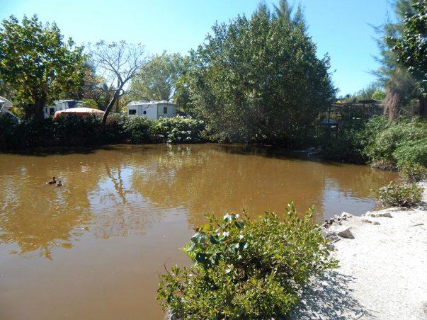 Periwinkle Park: Duck Pond