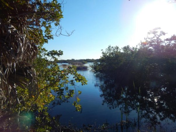 Bailey Tract: Mangrove Pond