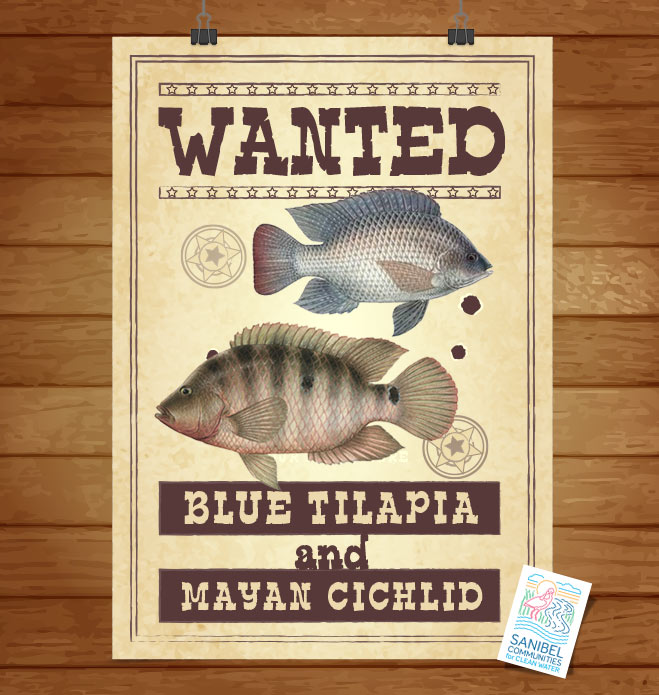 Wanted - Blue Tilapia & Mayan Cichlid