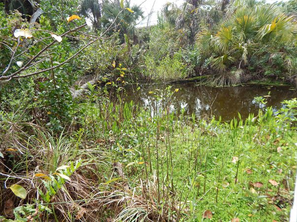 Pond Apple Park Shipley Trail – Conservation Lands